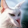 Rev_Pee_Kitty