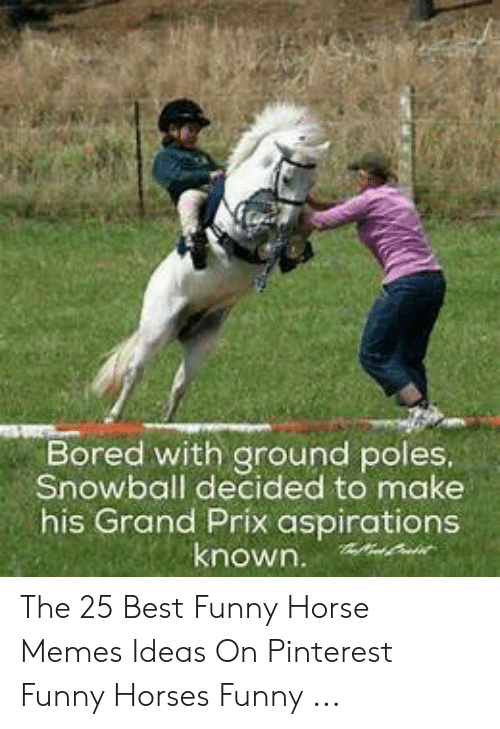 bored-with-ground-poles-snowball-decided-to-make-his-grand-53857527.png