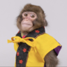 GuardianMonkey's Avatar