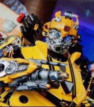 BumblebeeSanDiego